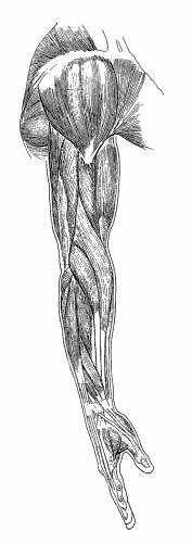 Arm Side
