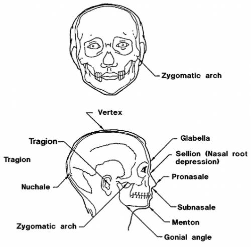 Head Medical Terms