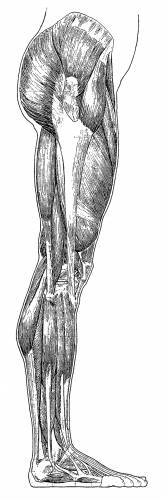 Leg Side Muscles Overview