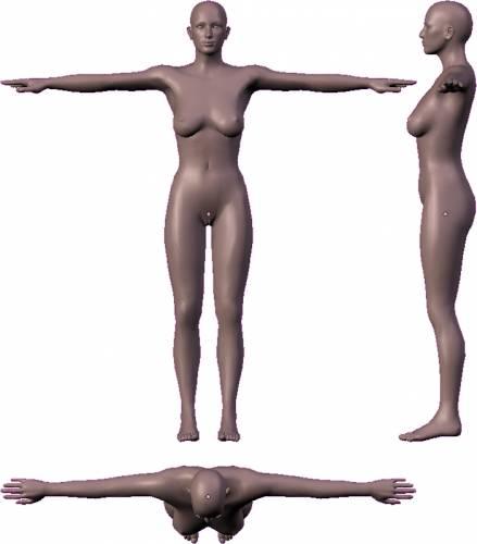 Female - Slim