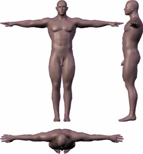 Male - Muscular