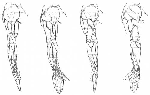 the-blueprints - blueprints > humans > anatomy > arm, Human Body