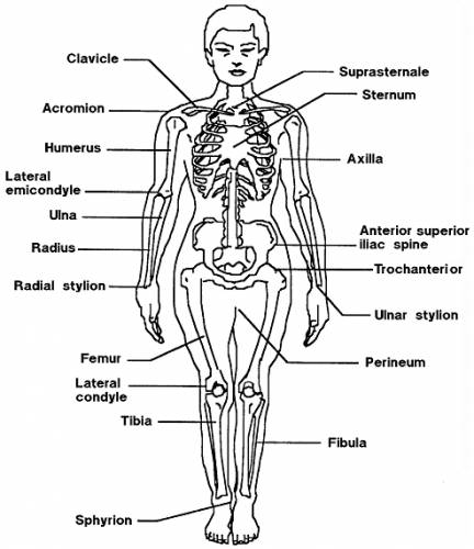 Blueprints Humans Anatomy Body Medical Terms