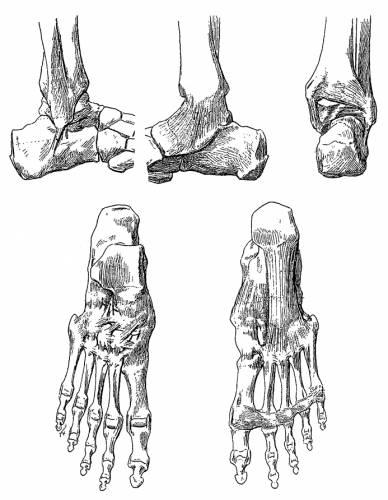 Blueprints > Humans > Anatomy > Foot Ligaments