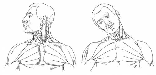 Blueprints Humans Anatomy Neck Motion Front