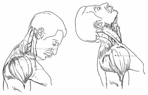Blueprints Humans Anatomy Neck Motion Side