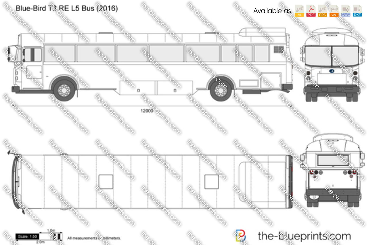 Blue-Bird T3 RE L5 Bus 2017